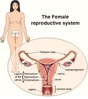 free femdom toilet slave video